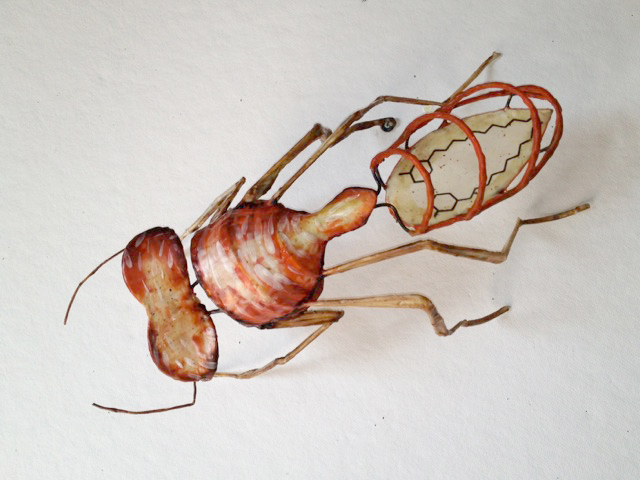 Fire Ant from the series Rainforest Sources by Christy Rupp